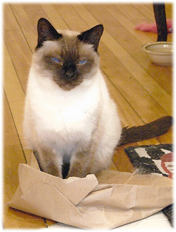 Sam....on Scamper's paper bag