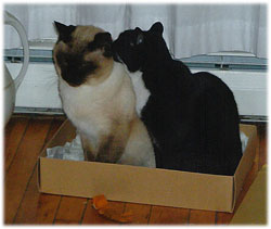 Sam and Scamper in the box